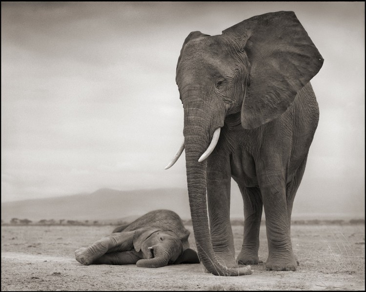 Elephant_with_Baby_on_Ground_30_8_1024x1024